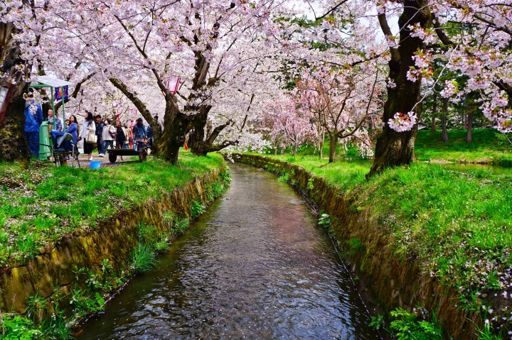Hirosaki Cherry BlossomFestival